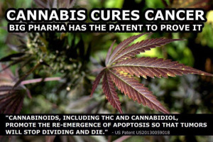 Cannabis cancer